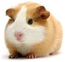 Все для домашних грызунов купить с доставкой по Украине 0674088931