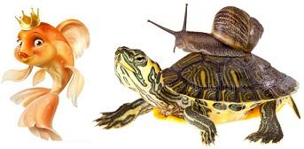 Все для аквариумных рыбок, рептилий и черепах 0674088931 со склада в Киеве. Доставка по Украине.