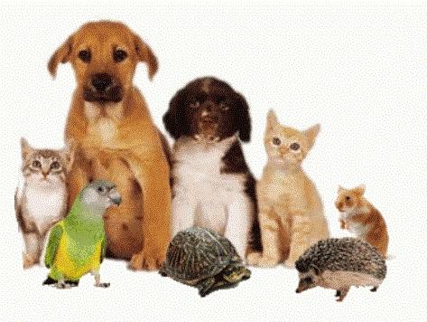 Корма для домашних животных